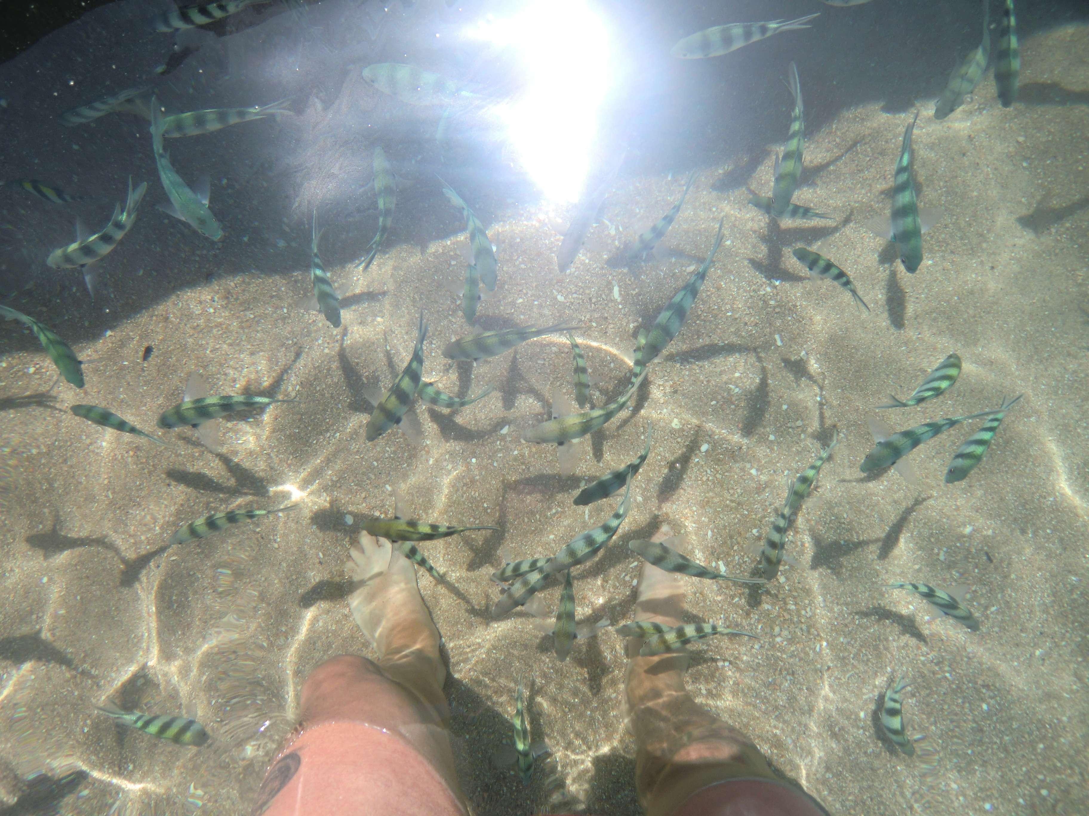 von Fischen umzingelt